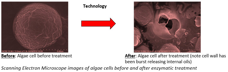 cells-image